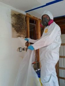 mold removal technician
